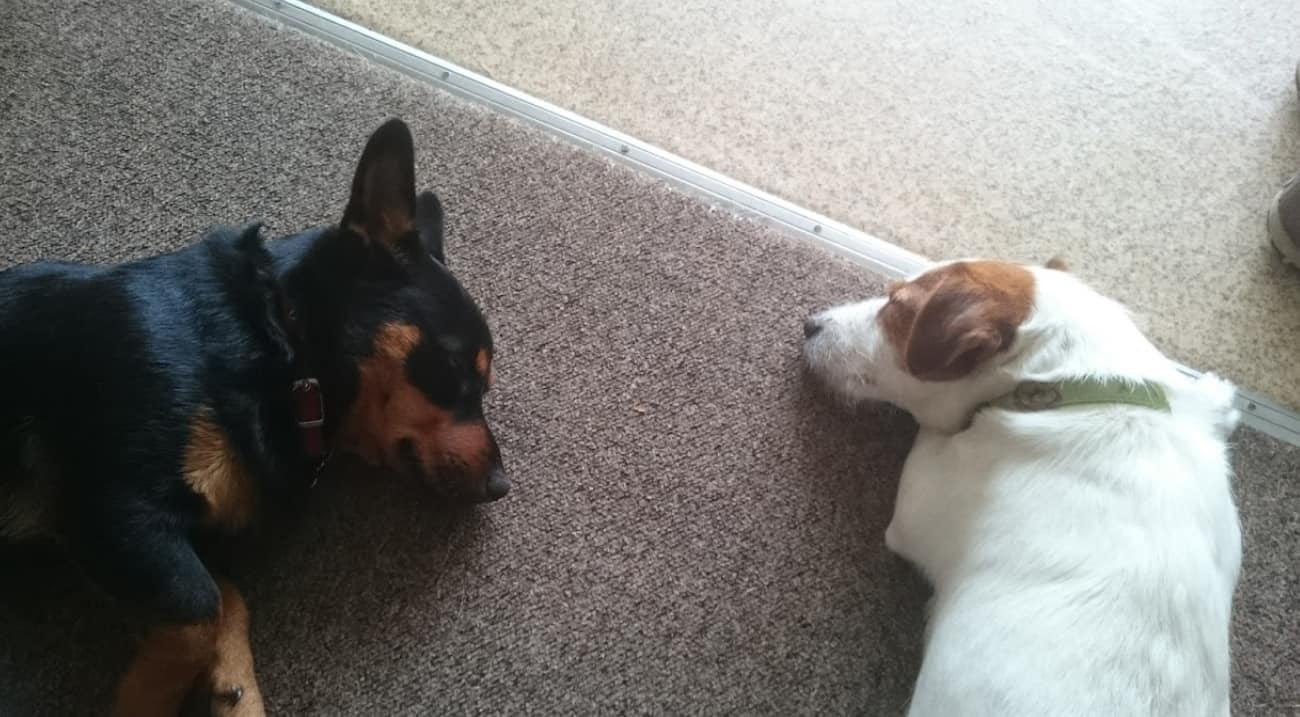 Puppies sleep on the carpet
