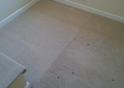 Wool carpet being cleaned
